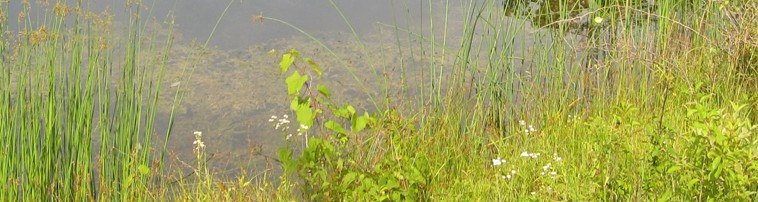 Wetland Delineations & Permitting